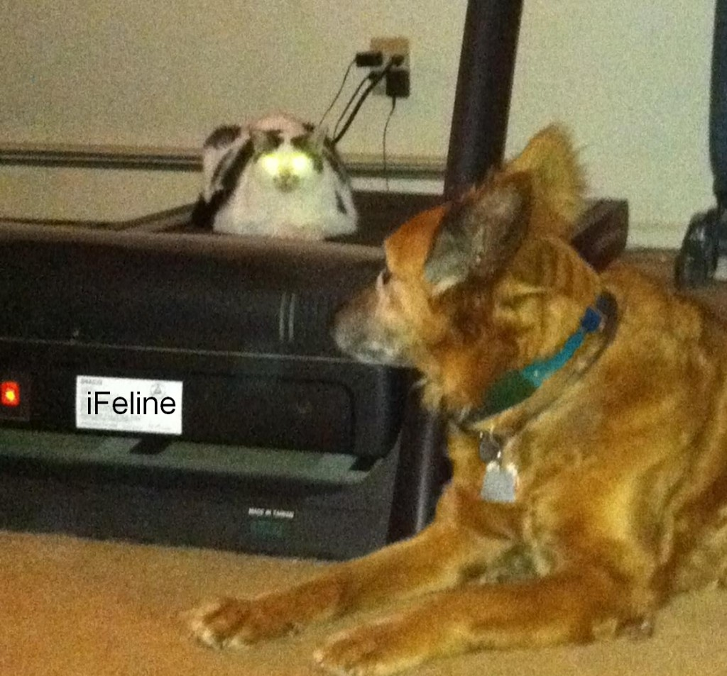 iFeline Cat Robot with Dog Death Ray