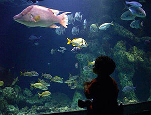 A boy enjoys a fish tank at the Oklahoma Aquarium