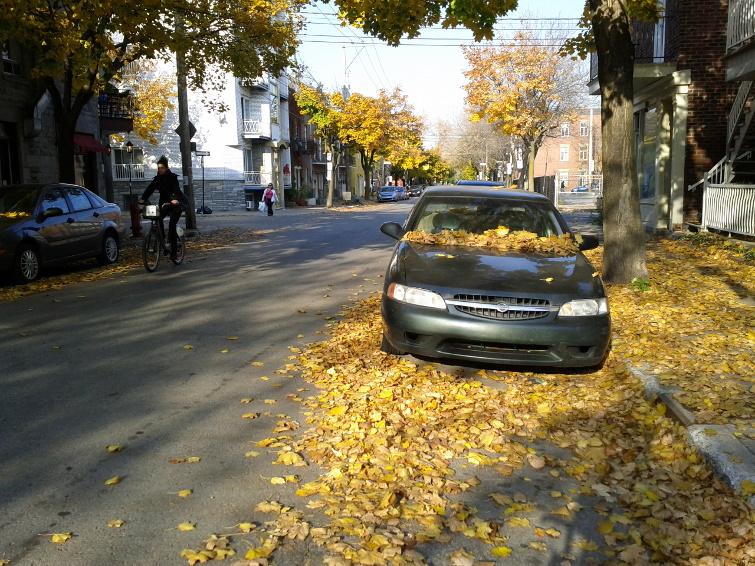 autumn-bike-ride-leaves