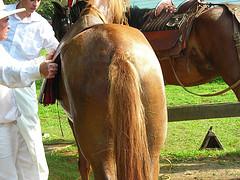 A Horse's Ass