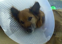 Jenny+Surgical+Collar