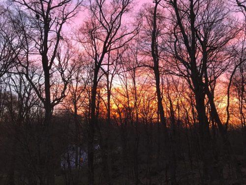 Salkin -Full Sunset Through Trees
